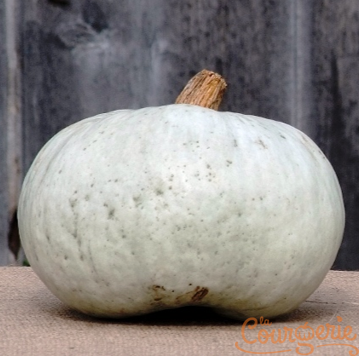 Courge Crown Prince