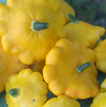 Courgettes pâtissons jaunes