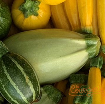 Courgettes zucchinis Grey Griller