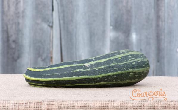 Courgette zucchini strié/courge à moelle