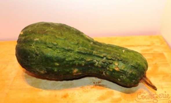 Courge Alligator