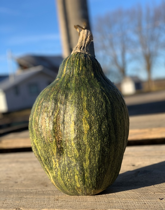 Courge Appache Giant