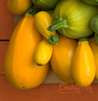 Courgettes zucchinis Green Grenade