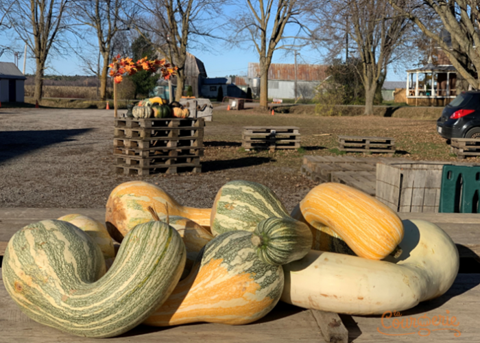 Courges Cushaws