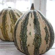 courges_vedettes1